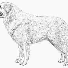 Disegni Di Animali A Matita Convenzionale 3732 Fantastiche Immagini