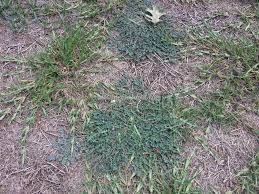 trugreen lawn service review 222202