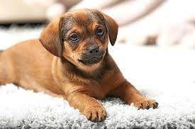 pet proof rugs best for dogs waterproof pet proof rugs