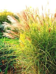 interior landscaping office. A Garden Bed Of Grasses Landscaping Ideas And Hardscape Design Sun Loving Ornamental Grass Interior The Office