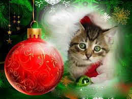Christmas Kitten Wallpaper Free | Wallpapers9