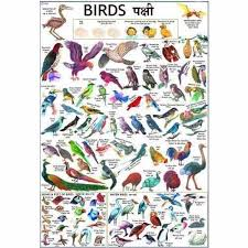 Birds Chart With Names In English Birds Charts