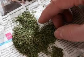 Мешканця Новопсковського району підозрюють у незаконному придбанні та зберіганні небезпечних наркотичних засобів