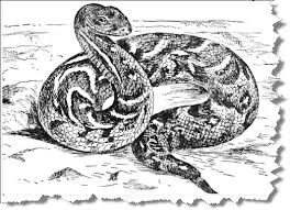 Small Picture Snake Coloring Pages Bestofcoloringcom