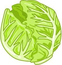lettuce clipart. Plain Lettuce Lettuce Clip Art Intended Clipart T