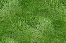 tall grass texture seamless. Grass_texture_original Tall Grass Texture Seamless E