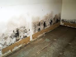 how to address drywall damage caused by mold moisture