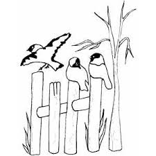 picket fence drawing. 300x300 Birds On Fence Coloring Page Picket Drawing