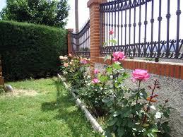 Cuidados De Los Rosales  Ideas Para Jardines Y DecoraciónCuidados De Los Rosales