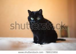 cute black cats with yellow eyes. Wonderful Cute A Cute Black Cat With Big Yellow Eyes Hunts To Cute Black Cats With Yellow Eyes W