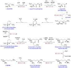 Biosynthesis - Wikipedia