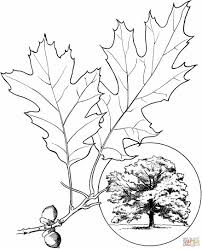 Small Picture Coloring Page Season Of Tumble Leaf On Amazon ad Download