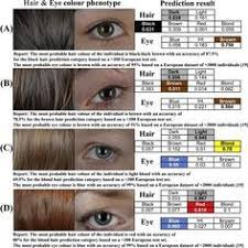 Human Hair Color Genetics Chart Google Search Forensic