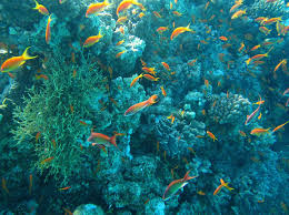 c reef with fish
