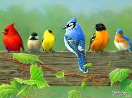Image result for invisible birds