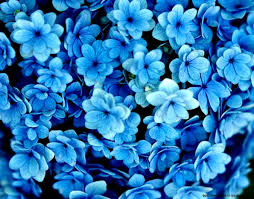 blue flowers background tumblr. Delighful Background Blue Flowers Tumblr And Background U