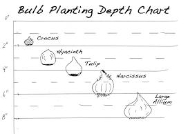 Bulb Lasagna Combinations Google Search Planting Bulbs