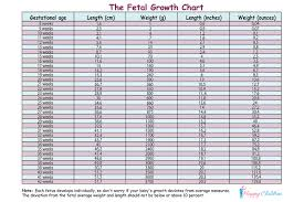 Growth Chart Fetal Length And Weight Week By Week Fetal Growth Chart The Childrens Happiness Guide