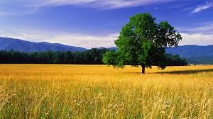 hd wallpaper nature landscape. Delighful Landscape Landscape HD Wallpapers Free Dowload In Hd Wallpaper Nature