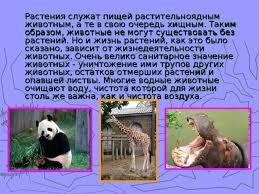 Роль животных в жизни человека биология презентации Растения служат пищей растительноядным животным а те в свою очередь хищным Таким образом