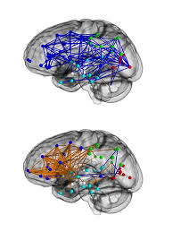 the hardwired difference between male and female brains could the hardwired difference between male and female brains could explain why men are better at map reading the independent
