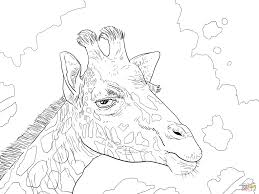 Small Picture Baby Giraffe Coloring Pages anfukco
