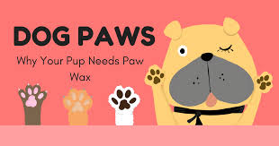 dog paw care why your pup needs paw wax
