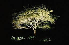 outdoor lighting effects. moonlight tree outdoor lighting effects i