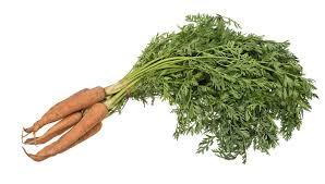 Carrot - Wikipedia