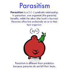 If you call someone a parasite, you are really hurling an insult! Parasitism Definition And Examples Expii