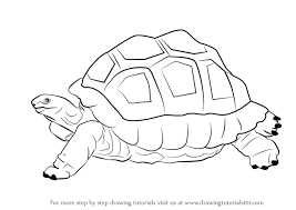 zoo drawing. Contemporary Zoo Learn How To Draw A Tortoise Zoo Animals Step By  Drawing Tutorials With Zoo O