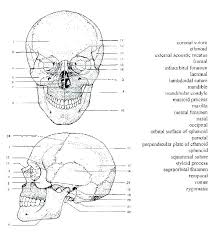 Bone Coloring Page Human Coloring Pages Human Brain Anatomy Coloring