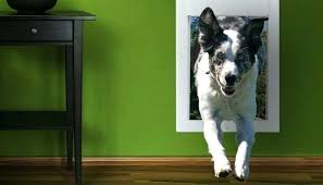 electronic dog door the convenience of electronic dog doors electronic dog door sliding glass