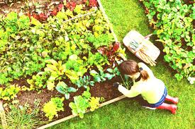 woman working in raised vegetable garden how to start a hirerush blog gardening tips for beginners