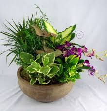 dish gardens. Premium Dish Garden Planter With Fresh Flowers In Stone Pot Gardens Kremp Florist