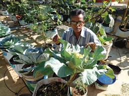 thiruvananthapuram resident r raveendran who won the innovative farmer award in 2016 from the
