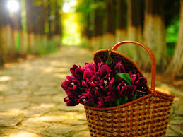 flowers basket wallpapers hd pictures