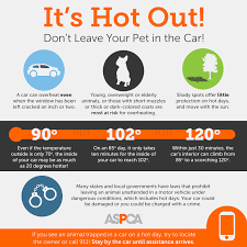 Hot Weather Safety Tips Aspca