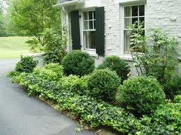Best 25+ Boxwood landscaping ideas on Pinterest   Landscaping ...