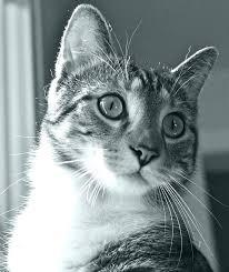 k d cat food alternative. Plain Alternative Hills Dog Food Alternative Tabby Prescription Diet K D Kidney Care Cat  Recipes Chicken Gorgeous Canned Alter  Science  With K D Cat Food Alternative O