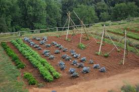 Small Picture Vegetable garden