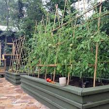 tomato trellis archway from learning yearning