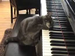 cute kittens sleeping on pianos.  Cute Cat Playing Piano Like Beethoven Nora And Cute Kittens Sleeping On Pianos D