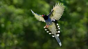 Image result for bird of paradise animal wallpaper