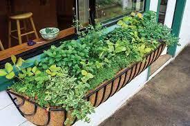 small space gardening organic