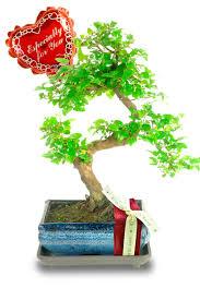twisty sweet plum valentines day bonsai tree gift