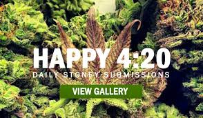 Image result for 420
