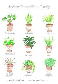 good indoor plants for low light good house plants image gallery of remarkable air cleaning plants