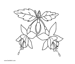 the color of fuchsia coloring page