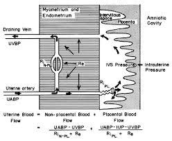 Uterine And Placental Blood Flow Glowm